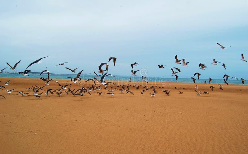 Birds on the beach royalty free stock photography
