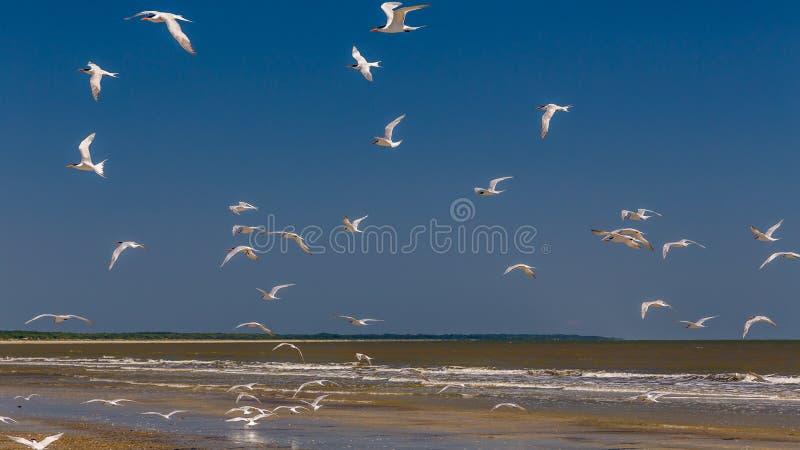 Birds at the Beach stock photo