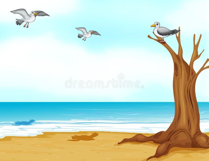 Birds at the beach royalty free illustration