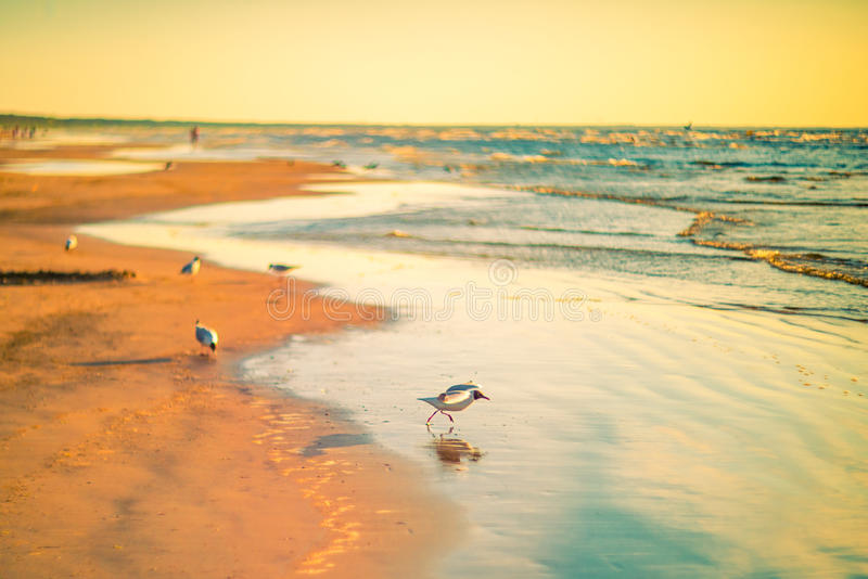 Birds at the beach sunset. Birds freedom at the beach sunset evening light royalty free stock photos