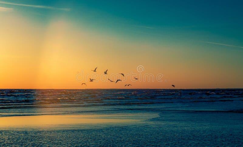 Birds at the beach sunset. Birds freedom at the beach sunset evening light beams stock image