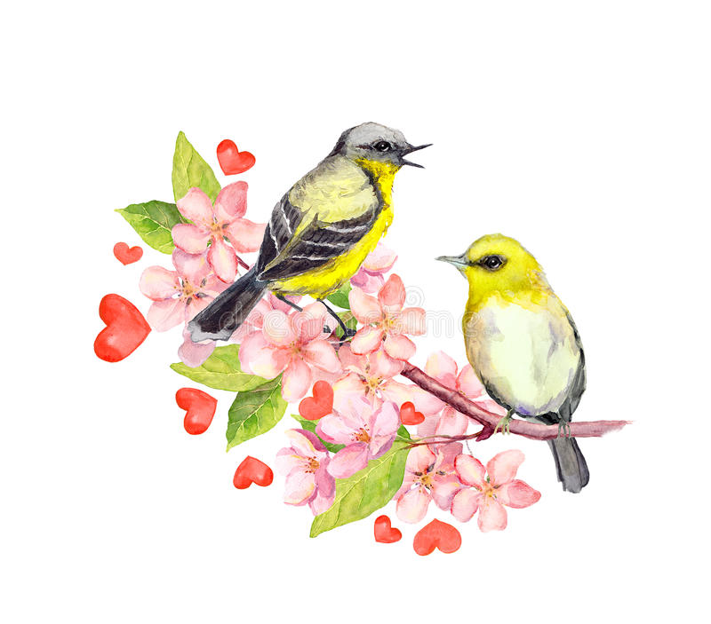 Birds on blossom branch with flowers. Watercolor vector illustration