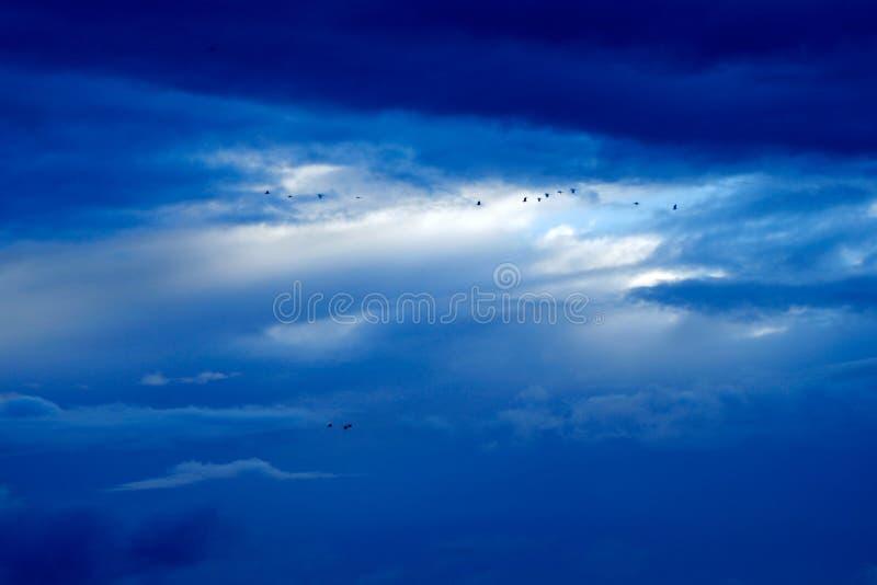 Birds on blue cloudy sky royalty free stock photos
