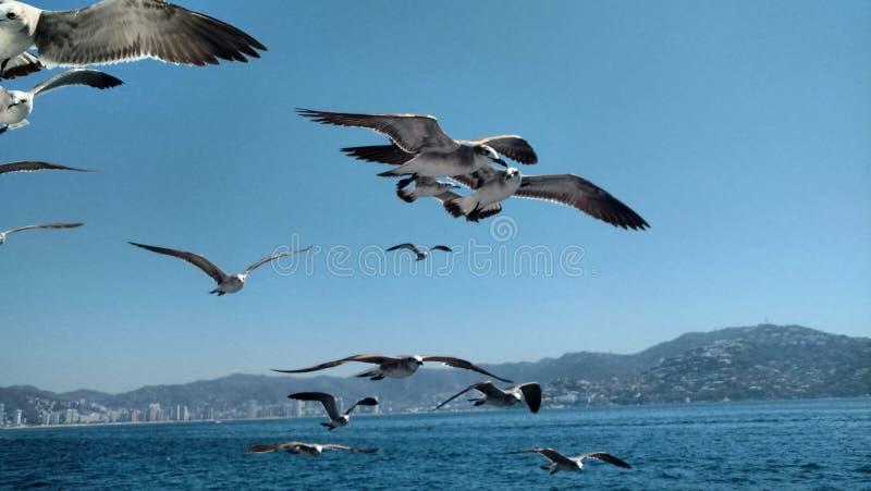 Birds in the blue sea stock photo