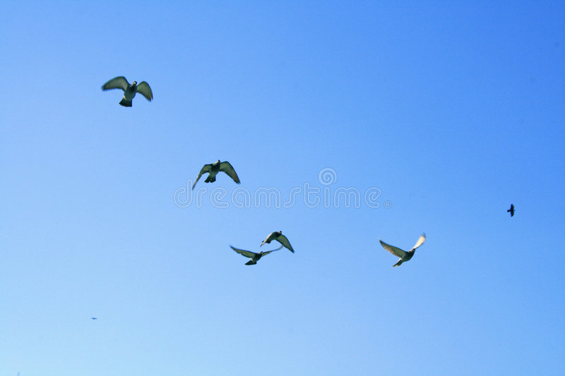 Download Birds in a blue sky stock photo. Image of nature, cloudless - 2758344