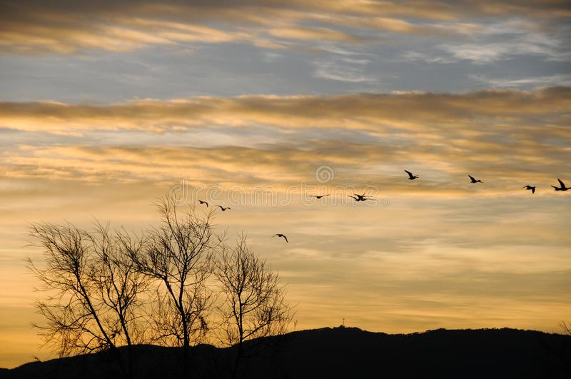 Birds in  blue sky and golden clouds. Sunrise in Nianhu Lake. Birds, blue sky, golden clouds, hill and trees make a beautiful picture royalty free stock images