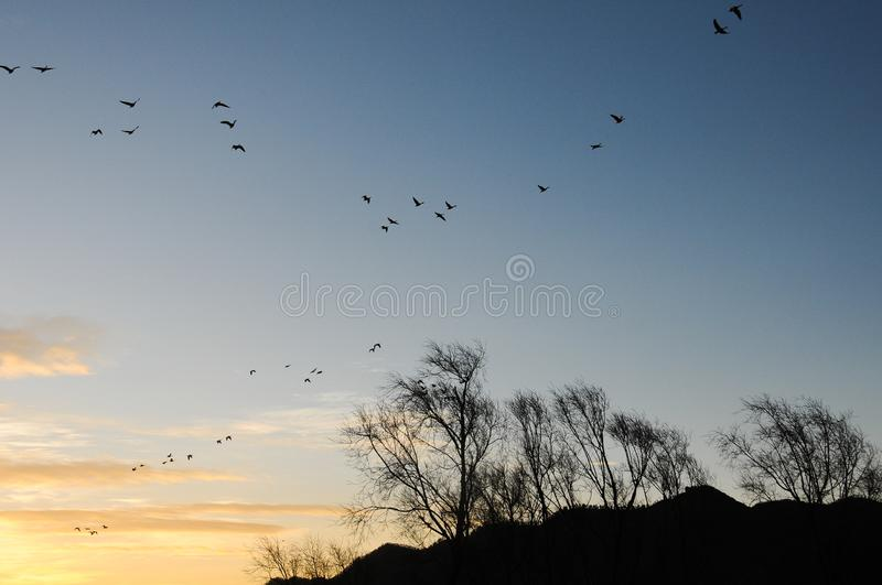 Birds and blue sky in Nianhu Lake. Nianhu Lake is located in a nature reserve in Yunnan Province. Nianhu Lake means miss someone. It is a habitat for rare birds royalty free stock photo