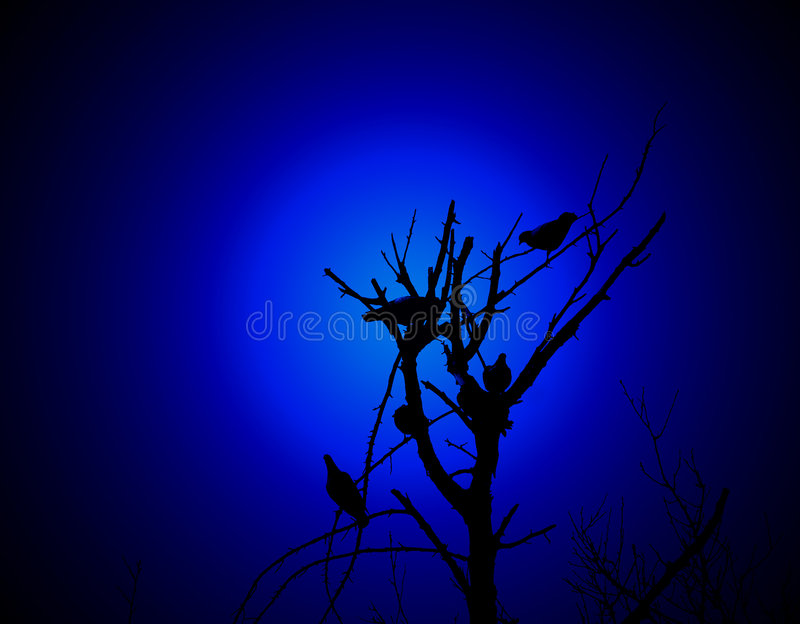 birds on a branch royalty free stock photography