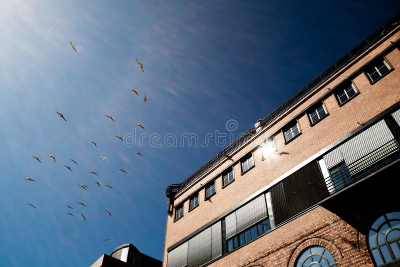 Birds and building top