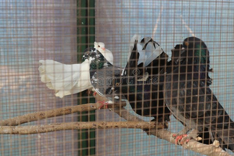 Birds in cage stock images