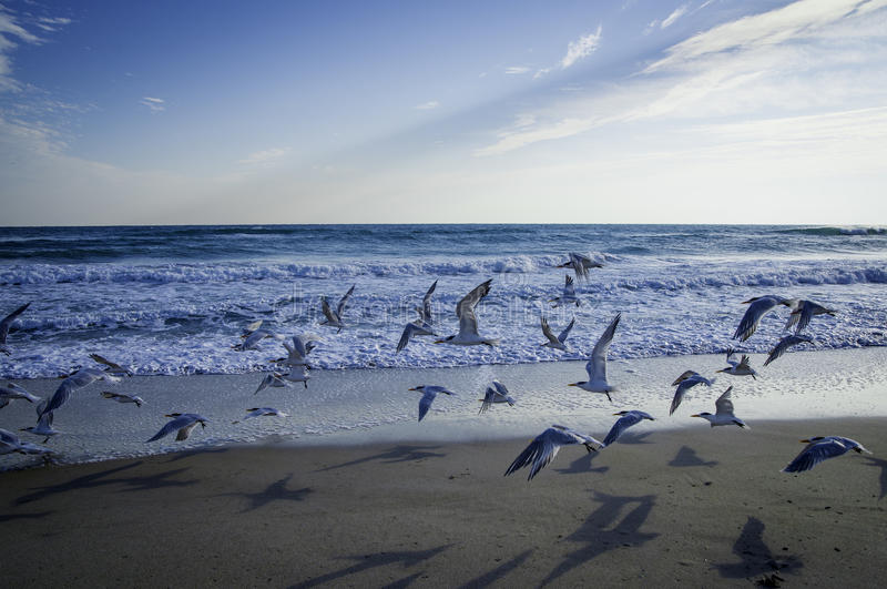 Birds at Canaveral National Seashore. In Florida in the Morning royalty free stock photo