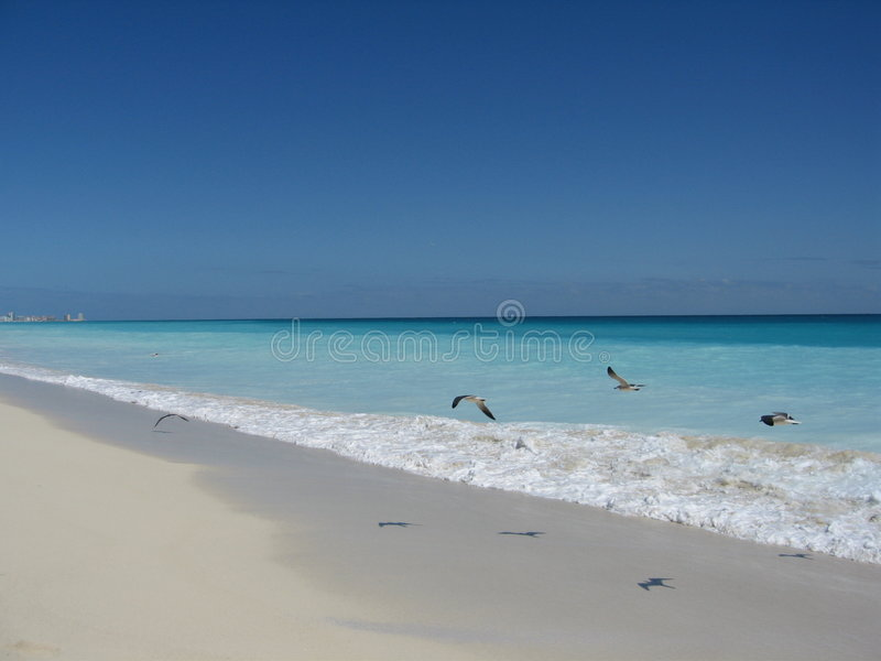 Birds on Cancun Beach royalty free stock photo