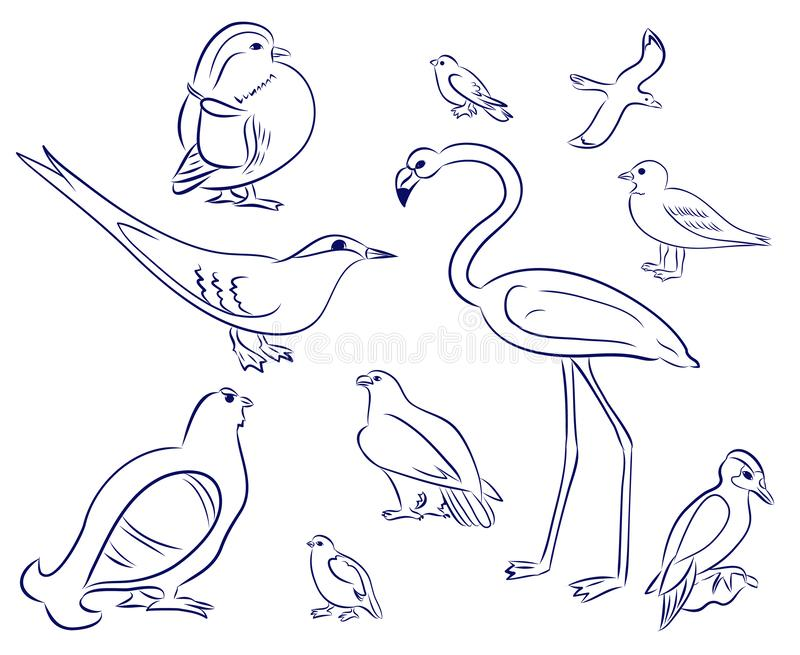 Birds cartoon set. Flamingo, gull, duck, woodpecker, black grouse, eagle, pigeon, sparrow, tern. Hand drawn doodle royalty free illustration