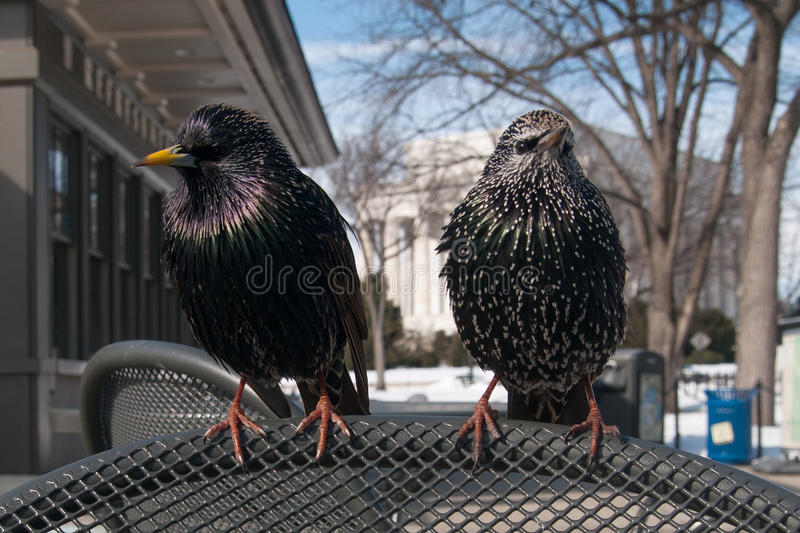 Birds on a chair stock image
