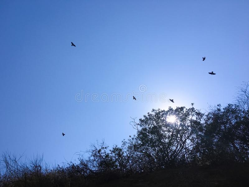 Birds circling above. Blue sky. royalty free stock photo
