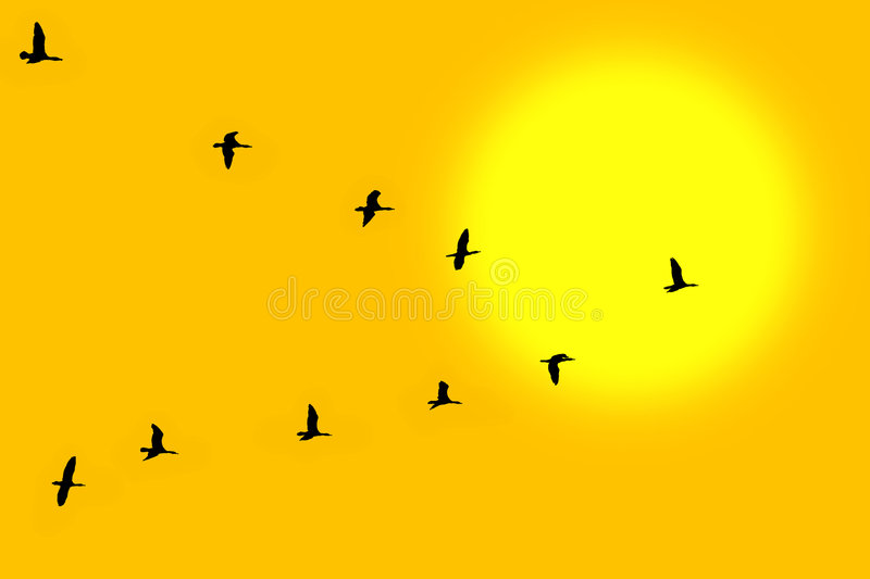 Birds in classic. V formation stock photos