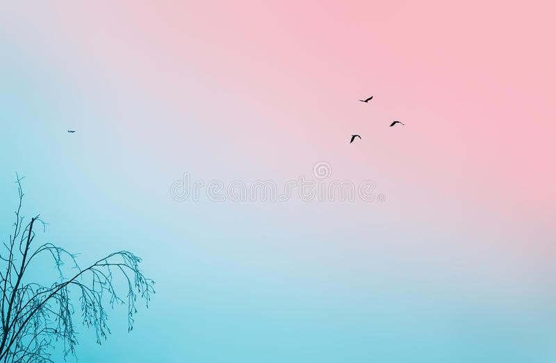 Birds In The Cloudless Sky royalty free stock image