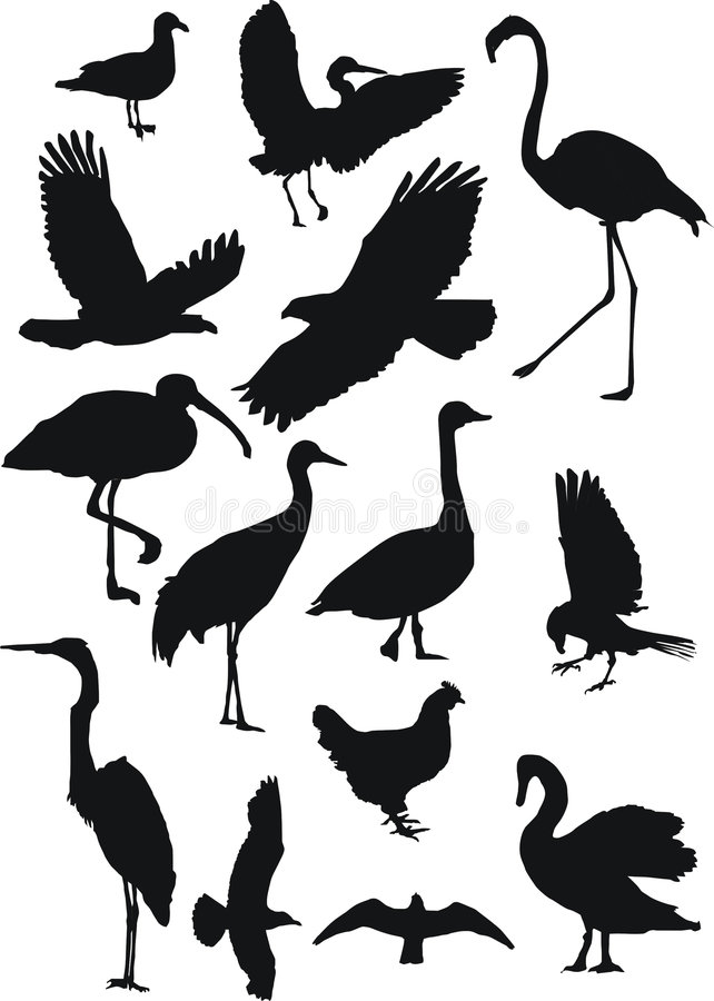 Free Birds Collection Stock Images - 3091844