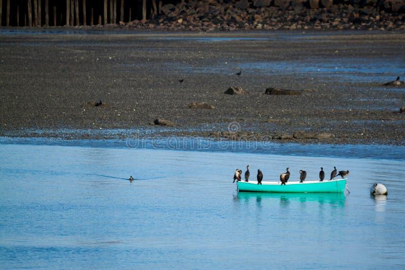 Birds congregate on a canoe stock photo