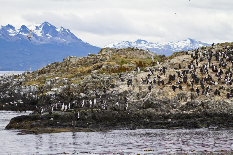 Download Birds - Cormorant Colony stock photo. Image of cloudy - 41301710