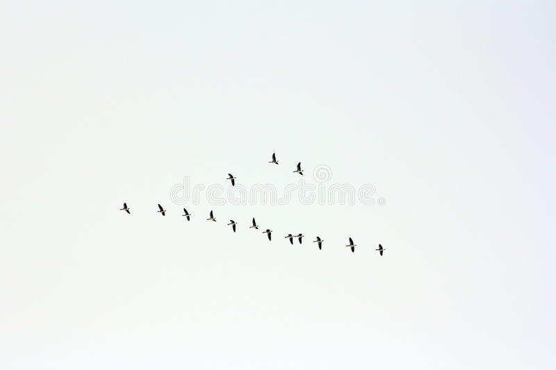 The birds. A dream birds of passage flies in the winter quarters stock photography
