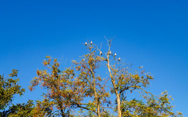 Birds on a dried branch royalty free stock photo