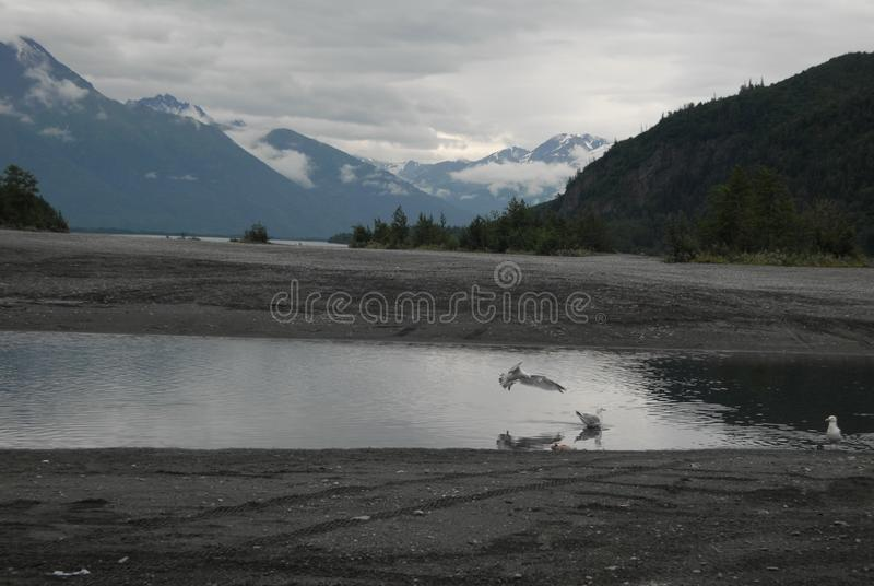 Birds drinking glacial run off stock photo