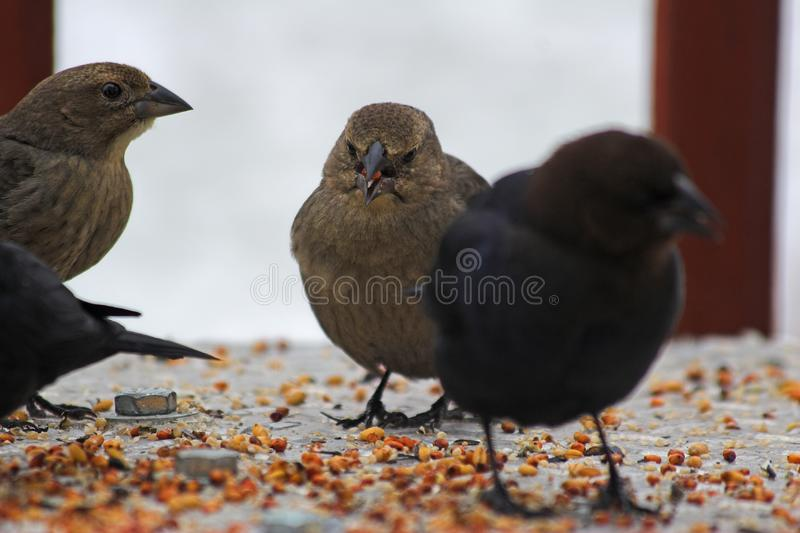 Birds eating limited depth