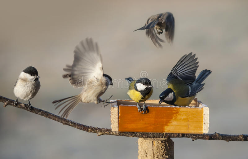 Birds eating seed from bird feeder stock photography