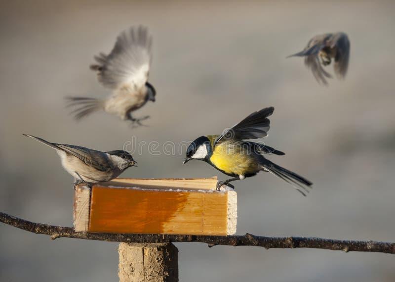 Birds eating seed from bird feeder. Winter stock photos