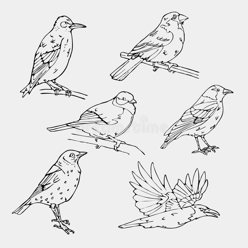 Birds engraved style. Stamp, seal. Simple sketch. Birds engraved style. Set emblem. Bird oriole chickadee sparrow blackbird nightingale finch bunting hangbird royalty free illustration