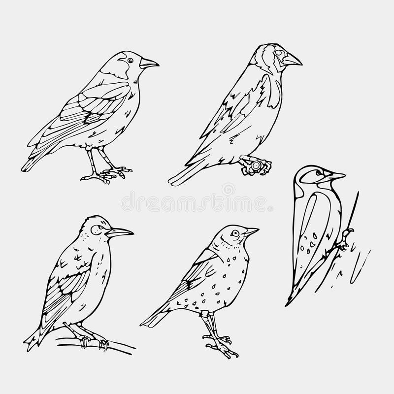 Birds engraved style. Stamp, seal. Simple sketch. Birds engraved style. Set emblem. Bird oriole chickadee sparrow blackbird nightingale finch bunting hangbird vector illustration