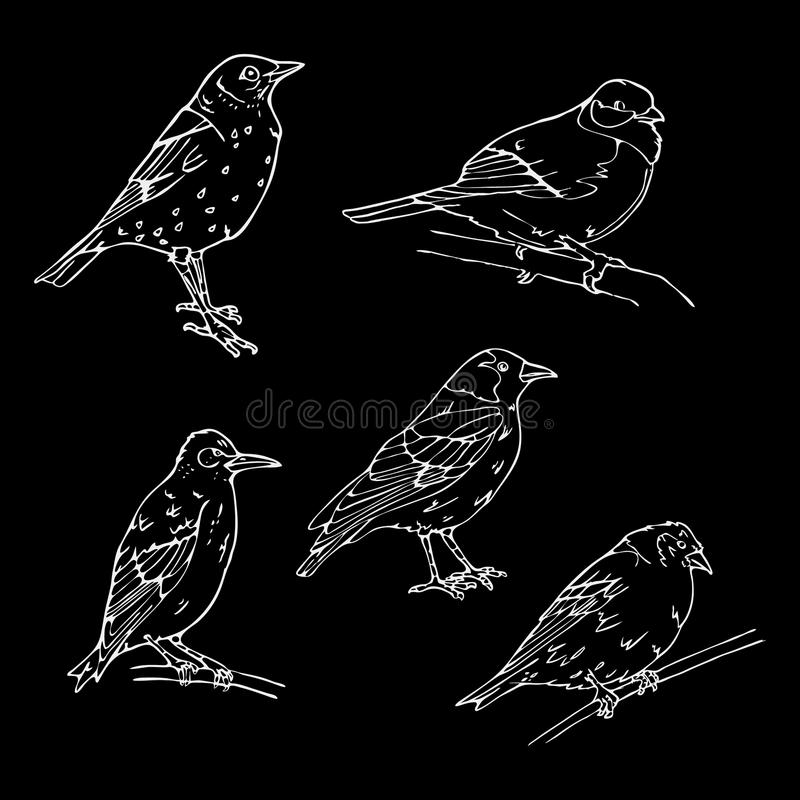 Birds engraved style. Stamp, seal. Simple sketch. Birds engraved style. Set emblem. Bird, oriole chickadee, sparrow blackbird nightingale finch bunting stock illustration