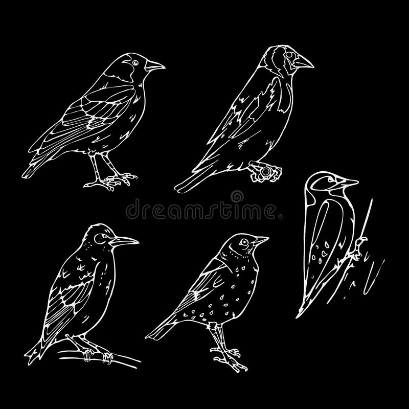 Birds engraved style. Stamp, seal. Simple sketch. Birds engraved style. Set emblem. Bird, oriole chickadee, sparrow blackbird nightingale finch bunting vector illustration