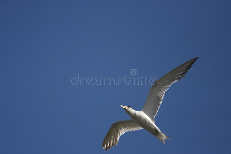 Download Birds Eye View stock image. Image of flying, animal, landscape - 14179767