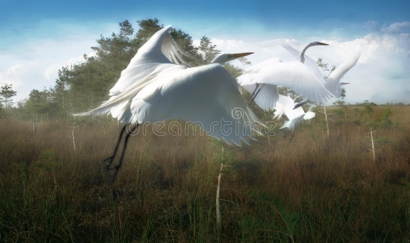 Birds Of A Feather royalty free stock image