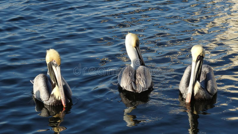 Birds of a Feather fotografie stock libere da diritti