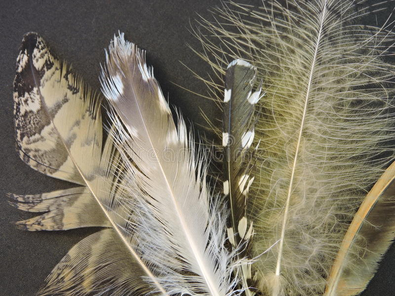 Birds feathers stock images