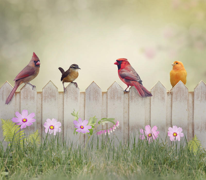 Birds on the Fence. Backyard Birds Perching on Wooden Fence stock photo