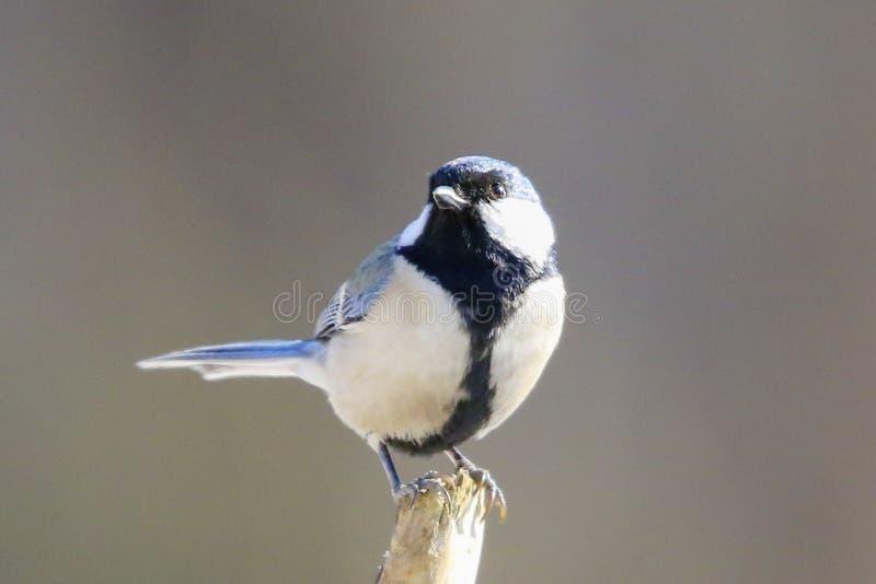 Bird. S filmed in northern China stock photo