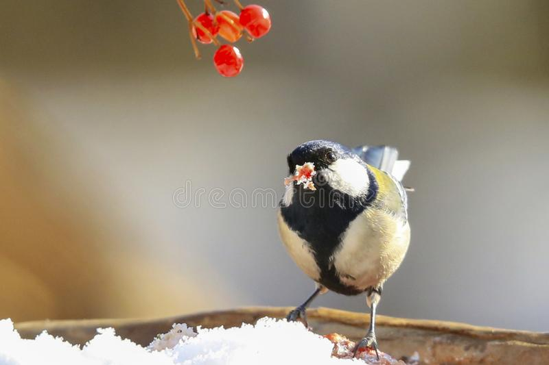 Bird. S filmed in northern China royalty free stock images