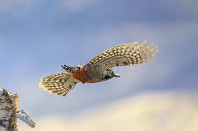 Bird. S filmed in northern China stock image
