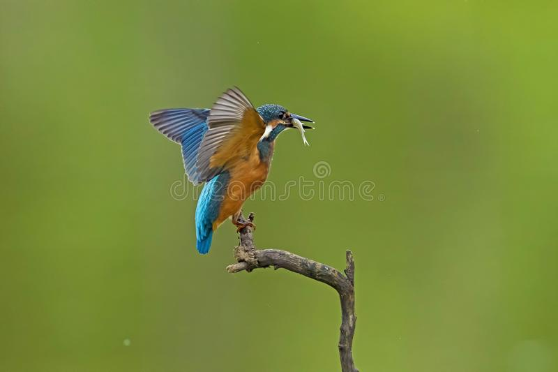 Bird. S filmed in northern China royalty free stock photography