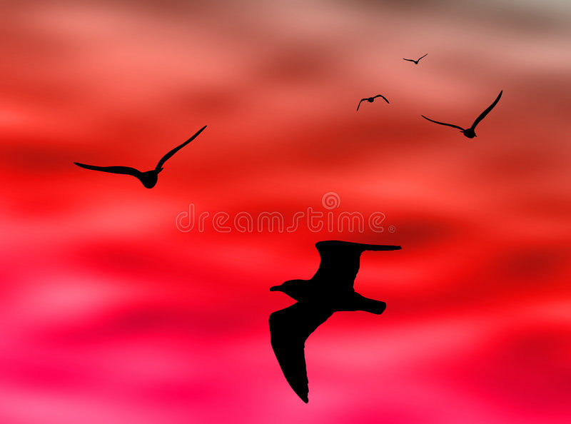 Birds flight stock images