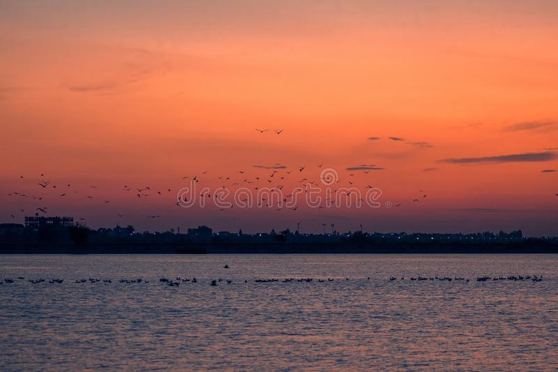 Birds in flight in the light of sunset over the lake stock photos
