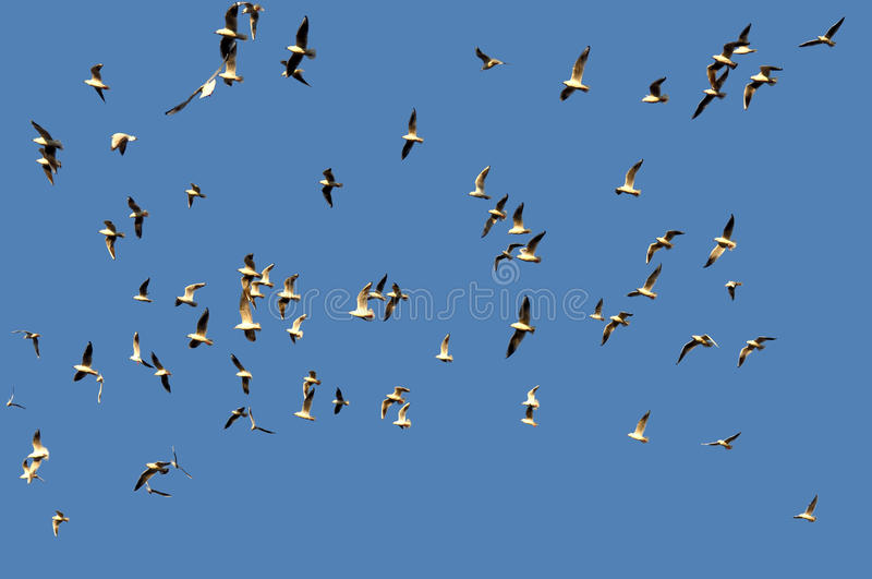 Download Birds Stock Images - Image: 30391404