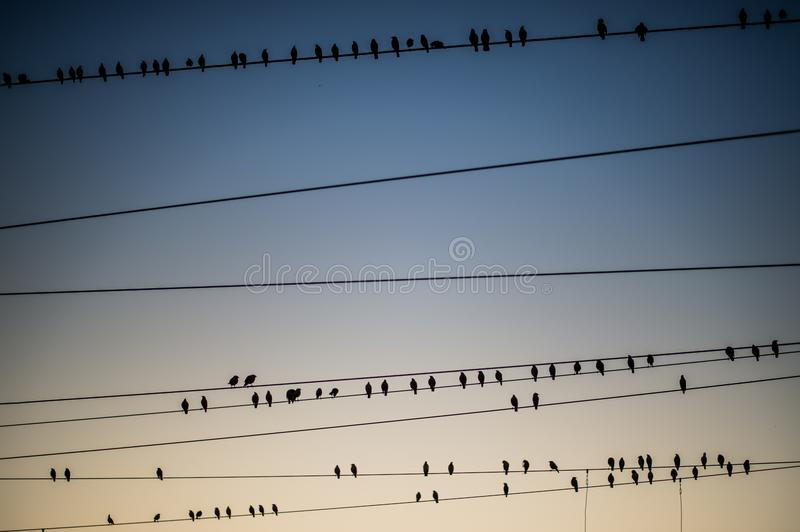 Birds flocking around the overhead power lines at Agra Cantonment railway station. At sunset royalty free stock photos