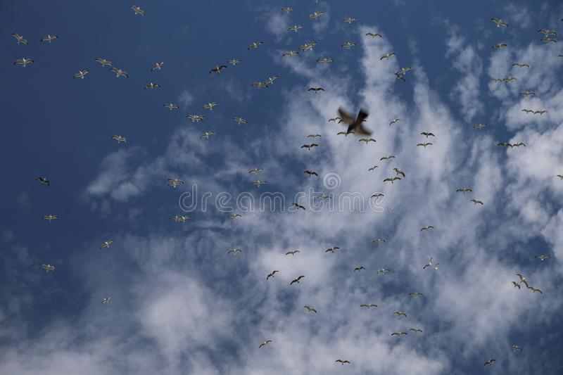 Birds fly in the sky royalty free stock image