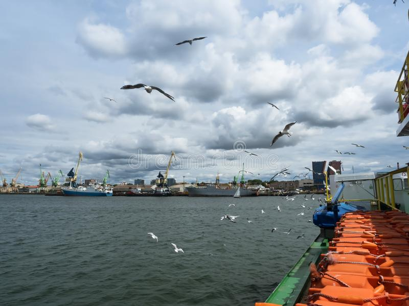 The birds fly near the ship, seagulls and Board the ship stock images