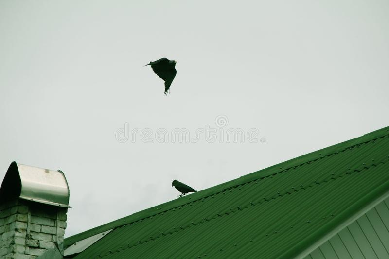 Birds fly and sit on the roof stock photo